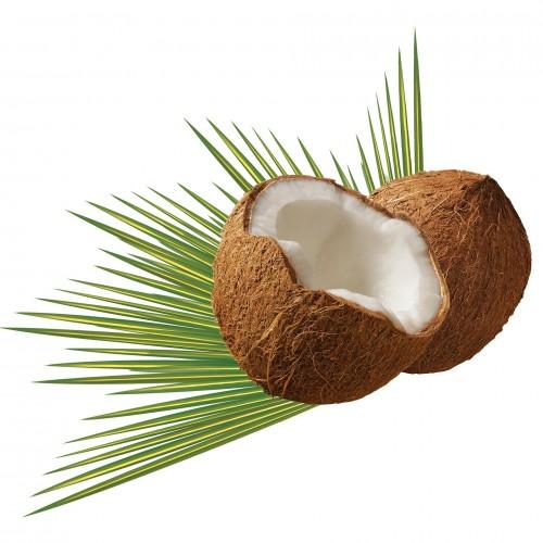 coconut-979858_1920
