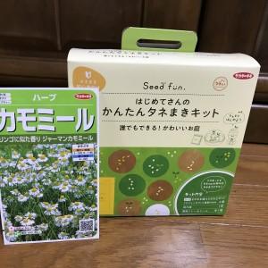 【ハーブ栽培】ジャーマンカモミールの種まき!